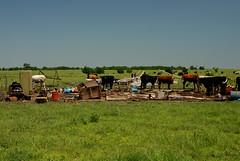 Kansas (rdodson76) Tags: kansas tornado destruction cows bovine cattle pasture field mammals agriculture outdoors bluesky greengrass grazing damage danger plains herd farming farm