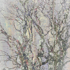 20/365 (Jane Simmonds) Tags: forestofdean trees branches treebark winter abstract 3652019 iphone multipleexposure