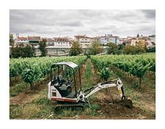 Tapada da Ajuda, Lisboa (Sr. Cordeiro) Tags: tapadadaajuda lisboa lisbon portugal campo field cultivado agricultura agriculture harvest tractor trator retroescavadora backhoe panasonic lumix gx80 gx85 1232mm