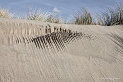 Lawine (Pieter Musterd) Tags: zand duinen kijkduin pietermusterd musterd canon pmusterdziggonl nederland holland nl canon5dmarkii canon5d denhaag 'sgravenhage thehague lahaye