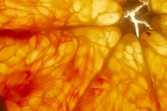 Orange Sanguine (Jtofs85) Tags: indoor blood creativ sony godox a99m2 sigma 105 macro