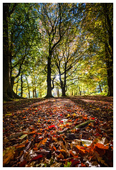 Land Of A Thousand Autumns (ianrwmccracken) Tags: wideangle d750 landscape nikkor1635mmf4 leaf ground estate falkland leaves fife silhouette tree low nikon green scotland autumn foliage red