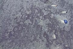 Blue in a Sea of Purple (brucetopher) Tags: purple sand pattern texture above beach cobalt quartz magnetic mineral glacial deposit nature natural found foundart naturesart abstract foam water creation tone tonal contrast ocean time erosion grain grains purplesand