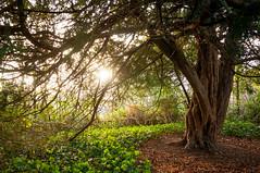 Late Autumn (Baker_1000) Tags: 2018 bath sunlight sunset dusk goldenhour tree branches autumn nikon d90 nikond90 raw