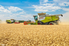 Wheat Harvest by CLAAS (martin_king.photo) Tags: harvest harvest2018 ernte 2018harvestseason combineharvester combine harvester new modernmachine summerwork powerfull martin king photo machines strong agricultural great czechrepublic agriculturalmachinery farm working modernagriculture landwirtschaft martinkingphoto moisson machine machinery field huge big sky agriculture power dynastyphotography lukaskralphotocz day fans work place yellow gold golden eos country lens rural camera outdoors outdoor goldenhour colours landscape fields lines claaslexion southmoravia claas flagship lexion780 terratrac clouds cloudyday bluesky