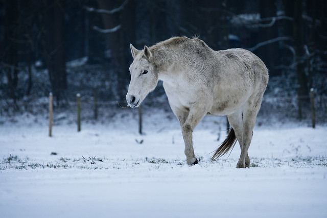 Snowy horses  -  color