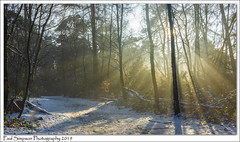 Twigmoor Woods Scunthorpe (Paul Simpson Photography) Tags: woods woodland twigmoorwoods northlincolnshire paulsimpsonphotography imagesof imageof photoof photosof snow winter cold sunshine sunny january2019 trees sonya77 nature naturalworld branches england coldweatherphotos chilly snowy shadows sunshinefilteringthroughtrees forest
