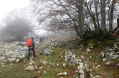 Urbasa (Paulo Etxeberria) Tags: mendizaleak montañeros hikers randonneurs urbasa lizarraga sanadrián pagoak hayas europeanbeech hêtres lainoa niebla mist brouillard bilbaoalpinoclub