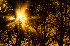 Another day on the road - sunrise on the trees (FLOCVROFF) Tags: sunrise trees chivaroff herbst autumn light sunlight rays 250mm