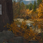 Fall colors 2018 11 thumbnail