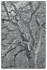 Warburg Reserve, Bix Bottom (FlickrDelusions) Tags: aonb bbowt oxfordshire trees blackandwhite chilternhills bw chilterns naturereserve warburgnaturereserve