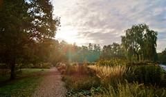 Warm Fall Sunrise (farmspeedracer) Tags: nature autumn haerbst fall sun sunrise ray beam light germany forest park 2018 october oktober tree sky cloud world photo landscape