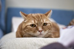 A9__DSC3122_C1 (Bazoka+Cynthia) Tags: cat alpha 小婆 新北市 樹林區 貓