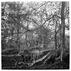 Birdfeeder (Mattias Lindgren) Tags: autumn sverige medium format 6x6 sweden pentacon six tl film iso 100 mf f28 120film scan fomapan 80mm bw höst foma analog mc biometar 2880 carl zeiss jena mcbiometar2880carlzeissjena foma100 fomapan100 iso100 mediumformat pentaconsixtl