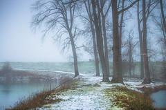 The road ahead (Ingeborg Ruyken) Tags: sneeuw morning empel 500pxs mist empelsedijk natuurfotografie fog instagram ochtend flickr snow