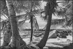 Petite Police Beach / Пляж Петит Полис (dmilokt) Tags: природа nature пейзаж landscape море sea пляж beach пальма palm dmilokt чб bw черный белый black white sky nikon d850