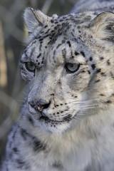 Marwell Zoo (nicbridgephotography) Tags: marwell zoo southampton animals sigma 70200