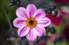 Flowers by Alberto Marquez Marin 🇻🇪 (Alberto Márquez Marín) Tags: 2019naturevenezuelacopyrightedalmavzla 2018 20182