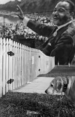 Molly & Martin (PositiveAboutNegatives) Tags: nikon slr vintagecamera nikonf plainprism eyelevel 40mm cosinalvoigtlander cv40mmf2ultron film analog bw blackandwhitefilm foma fomapan fomapan200 rodinal coolscan lakeworth florida dog lab labrador