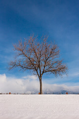 tree snow clouds and blue sky (johngpt) Tags: sandiamtns trees snow clouds places tree efs1755mmf28isusm canon40d treemendoustuesday htmt