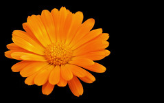 FLOR (Joan Biarnés) Tags: corts pladelestany girona catalunya 294 panasonicfz1000 macro flor