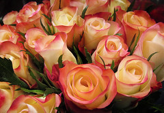 A Rose is a Rose (arbyreed) Tags: arbyreed smileonsaturday aroseisarose roses yellowroses close closeup flower bouquet bouquetofroses circusroses