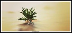 stay strong (NadzNidzPhotography) Tags: nadznidzphotography staystrong alone plant grass nature quotes aftertherain flood water reflection naturephotography naturallight natureart natureisanartist fujifilmxt10 fujifilm fujinon fujinonxf60mmf24rmacro xf60mmf24rmacro