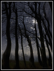 Ridgeway 041218 (Gibbom) Tags: ridgeway multipleexposures me canon7dii walking landscape trees beeches light mystery silhouette branches black toned inky dark movement canonefs1855mmf3556isstm darkmatter energy