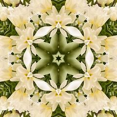 Kaleido Abstract 1883 (Lostash) Tags: art abstract edited nature patterns symmetry kaleidoscopes