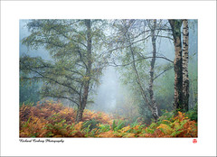 Walk This Way (Chalky666) Tags: tree trees wood woodland forest fog mist autumn landscape southdowns westsussex painterly art