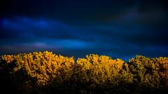 Bosque encantado (pepoexpress - A few million thanks!) Tags: nikon nikkor d750 nikond75024120f4 nikond750 pepoexpressflickr madridrio madrid sky sunset sunrise amanecer cielosdemadrid
