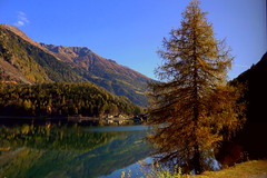 Lake Poschiavo (annalisabianchetti) Tags: lake lago mountains montagne autumn autunno alps travel tree albero reflections riflessi beautiful switzerland svizzera