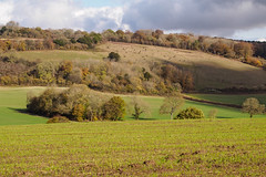 Fields near Abinger-MB035331 (tony.rummery) Tags: abinger autumn autumncolours epm1 fields landscape mft microfourthirds olympus pen surreyhills dorking england unitedkingdom gb