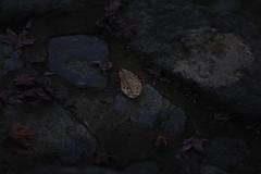 20181117__神護寺西明寺_0415_sdQuattroH (mu_x2012) Tags: jinngoji kyoto japan sigma sd quattro h 70mm f28 dg macro art