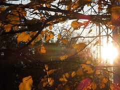 Leaves&sun (cloversun19) Tags: romantic october september russia russian car road street blue sky maple leaves town city light sun yellow autumn trees tree rain animal field grass landscape branches leafs foliage spb walking country holiday holidays park garden dream dreams positive forest happy view grey legend fairytale fir firtree birch village evening leaf rainbow