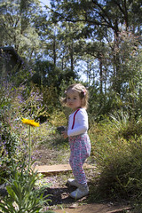 (louisa_catlover) Tags: portrait family child toddler daughter tabitha tabby karwarra karwarraaustraliannativebotanicgarden garden nature outdoor morning sunny summer december kalorama dandenongs dandenongranges melbourne victoria australia