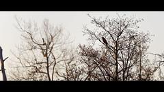 Silhouette lointaine (Alexandre LAVIGNE) Tags: hdpentaxdfa150450mm pentaxk1 format2351 silhouette ambiance faucon k1 lointain lumière nature oiseau ombre rapace saintquentin picardiehautsdefrance