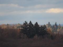 Light and Shadow - Canon PowerShot SX70 HS - Landschaft, landscape:  Naturpark Schönbuch - 1265 mm - over the summits - Über den Wipfeln (eagle1effi) Tags: canonpowershotsx70hs canon powershot sx70 hs sooc eagle1effi new 2018 december canonsx70 bridgecamera digic8 zoomer superzoomer sx70hs bestof allinonecamera kompakte kamera sx70best klasse tollebilder photos bridgekamera best photo bilder von newsx70 bild brigekamera foto beste compact camera reisekamera travelcamera selection powershotsx70 great bestebilder canonpowersho tsx70hs canonpowershot landscape landschaft reference