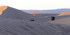 Coucou du matin !! (clairetresse) Tags: maroc octobre 2018 mhamid elghizlane zagora désert