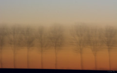 Where is end of the road? #4 (mirosławkról) Tags: nikonnaturephotography night poland podlasie tree trees sky orange orangeandblue sunset blurred lines icm