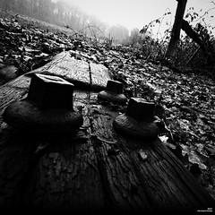 La bille de chemin de fer (Un jour en France) Tags: bille nature carré noiretblancfrance canonef1635mmf28liiusm canoneos6dmarkii automne