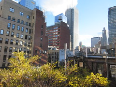 2018 November Dropping Leaves Tree 4210 (Brechtbug) Tags: 2018 november dropping leaves tree virtual clock tower from hells kitchen clinton near times square broadway nyc 11032018 new york city midtown manhattan fall autumn weather building dark low hanging cloud hell s nemo southern view ny1rain