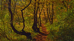 Exuberant Nature, Bix, Oxfordshire, England (Oswald Bertram) Tags: bbowt warburg warburgnaturereserve chilterns chilternhills thechilternsaonb autumn autumncolours fall fallcolors herbst herbstfarben otoño automne couleursdautomne coloresdelotoño