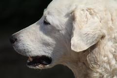 My friend Levi (excellentzebu1050) Tags: dog doggy farm animal pet farmdog animalportraits closeup outdoor coth5 sunrays5