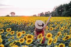 Vermont sunset (4 Loomis) Tags: sunset summer peace sunhat sunflowerfield sunflowers vermontsummer sunflowersunset
