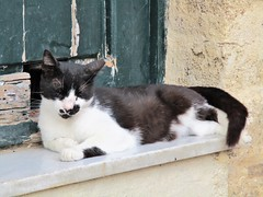 Snoozing (pefkosmad) Tags: rhodes rodos rhodesoldtown rhodestown backstreets holiday vacation vacances exploring cats feralcats greece greekislands griechenland dodecanese town calico blackwhite