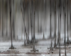 birds just standing around in the rain (gwashley) Tags: california alameda arrowheadmarsh bird legs