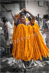 Flowery Dress (channel packet) Tags: india west bengal kolkata flower market porter garlands blooms decor decorations religion orange chrysanthemum people davidhill