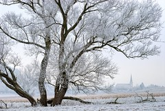 *The old willow and the church* (Albert Wirtz @ Landscape and Nature Photography) Tags: albertwirtz weide tree baum winter willow wintermagic winterzauber moseleifel eifel church kirche hoarfrost frost raureif bombogen neuerburg wittlichneuerburg wittlichersenke wittlichvalley nature natur natura landscape paesaggi paysage campo campagne campagna paisaje deutschland germany allemagne rheinlandpfalz rhinelandpalatinate nikon d200 albertwirtzlandscapeandnaturephotography albertwirtzphotography rhénaniepalatinat bernkastelwittlich