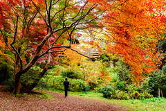 At Todoroki Valley Park of autumn leaves : 等々力渓谷公園 (Dakiny) Tags: 2018 winter december japan tokyo setagaya todoroki nature landscape park valley todorokivalleypark street autumnleaves people nikon d750